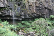 Bindaree Falls in January