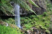 Bindaree Falls in October